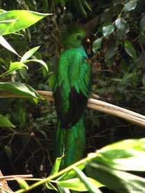 Sacred Mayan Bird von Laura Medina Rascón