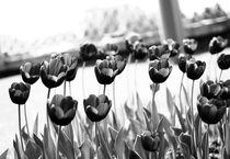 Tulips #2 by Mark Zhuravsky