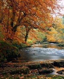 River Dart, Devon, England by Craig Joiner
