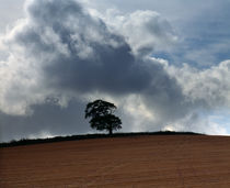 Tree on Brendon Hills, Somerset by Craig Joiner