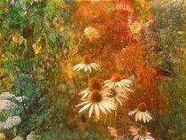im Garten von claudiag