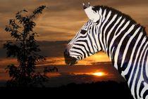Zebra im Sonnenuntergang von Elke Balzen