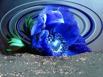Blaue Anemone by Elke Balzen
