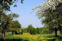 Frühling in der Wetterau by Elke Balzen