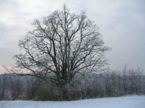 Winter Tree von Kimberley Collins
