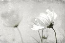 Im Wind... von Martin Kretschmar