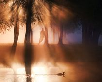 Morning in the park by Alexei Mikhailov