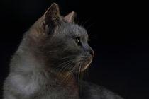 Chef im Revier - Katze - cat von Caren Kluth