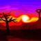 My-dusk