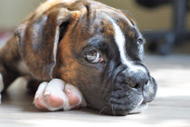 Hundeblick by Jana Behr
