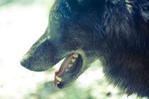 Gasping Wolf von jb1er