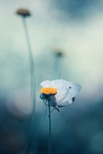 Butterfly von Erol AYYILDIZ