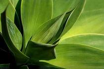 ... grünes BLATTwerk von pichris