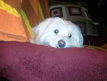 Puppy love von Toni Lafferty