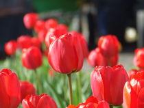 Tulips von Vladas Trak