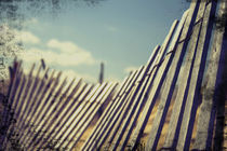 The Old Fence by Heather Reid