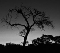 dry tree africa von james smit