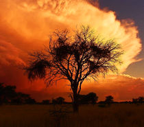 african skies von james smit