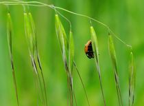 ladybird by Erol AYYILDIZ