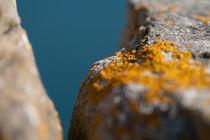 Yellow Lichen by jb1er