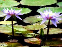 Lilies. von Ana Batista