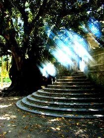 Light. von Ana Batista