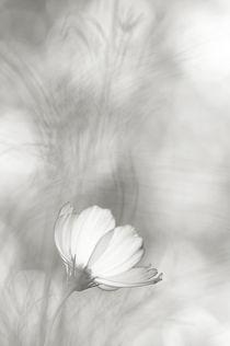 Que la lumière soit... von Pierrette Roc (Lunienne)