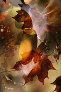 Maples moon von Pierrette Roc (Lunienne)