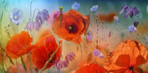 Happy poppies von Pierrette Roc (Lunienne)