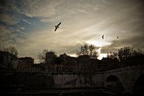 Freedom von Luca Casamassima