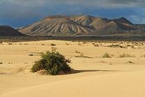 Fuerteventura, Dünenlandschaft mit Vulkanbergen bei Corralejo von Frank Rother