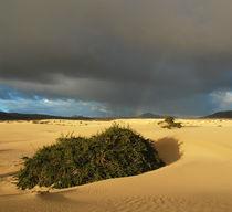 Fuerteventura, Dünenlandschaft mit Gewitterwolke von Frank Rother