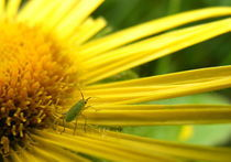The Aphid's Perspective