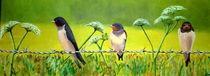 Bird on a wire von Wendy Mitchell