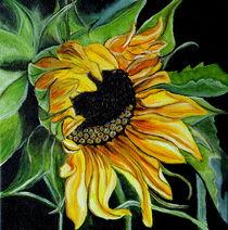 Sunflower by Wendy Mitchell