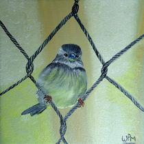 House sparrow von Wendy Mitchell