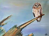 Short-eared owl by Wendy Mitchell