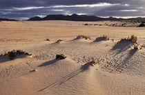 Fuerteventura, Dünenlandschaft bei Corralejo by Almut Rother