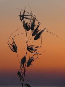 Mystische Abendstimmung auf Paros von Almut Rother