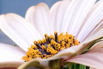 Flower-1-copy