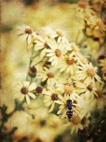 Summer Memories von Stefan Nielsen