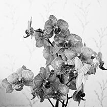 Orchids I by Sarah Spence