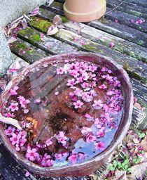 Pink Flowers in Water von Jenna Wylie