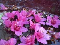 Tiny Pink Flowers von Jenna Wylie