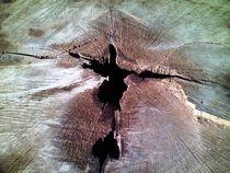 Close Up on Tree Stump von Jenna Wylie