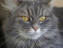 Katze, von Henriette Abt