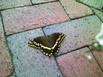 Butterfly on Bricks by Jenna Wylie