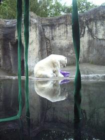 Polar Bear Reflection von Jenna Wylie