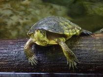 Happy Turtle von Jenna Wylie