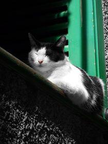 Siesta In the Sunshine  von Mark Cowie